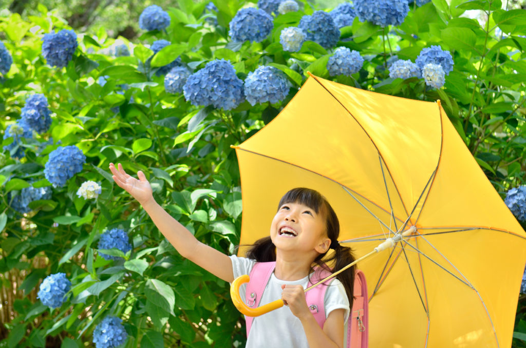 elementary school student puts up a yellow umbrella around blue flowers